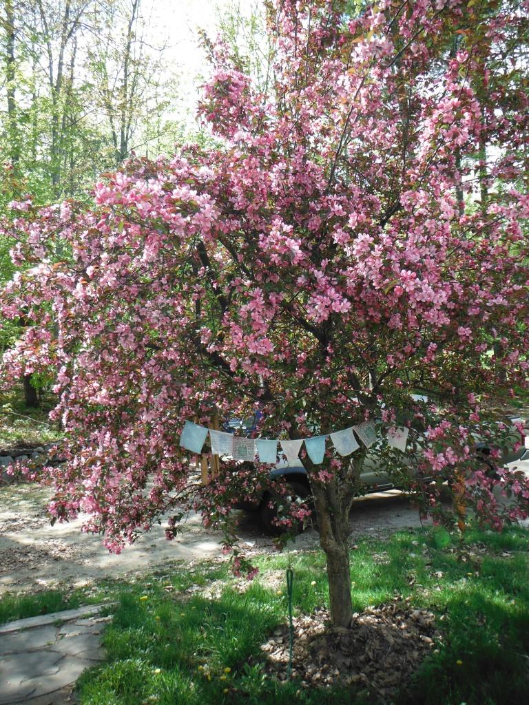 moc spring