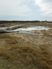 beach marshes