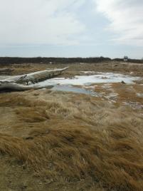 beach marshes