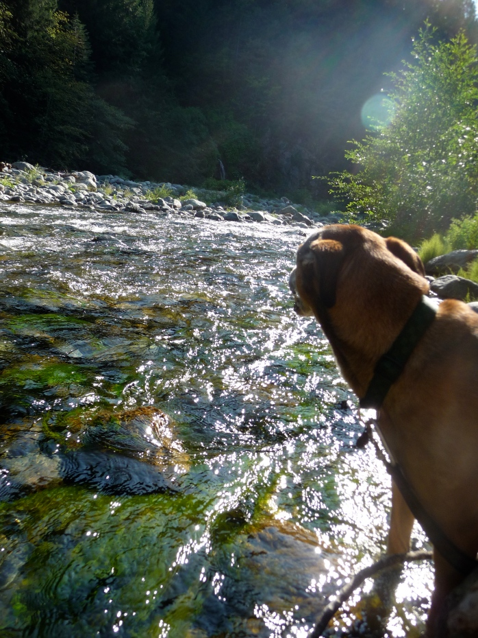 Honey on the Yuba, what better way to pass the day.  Dogs, water, sun, the possibility of nuggets…