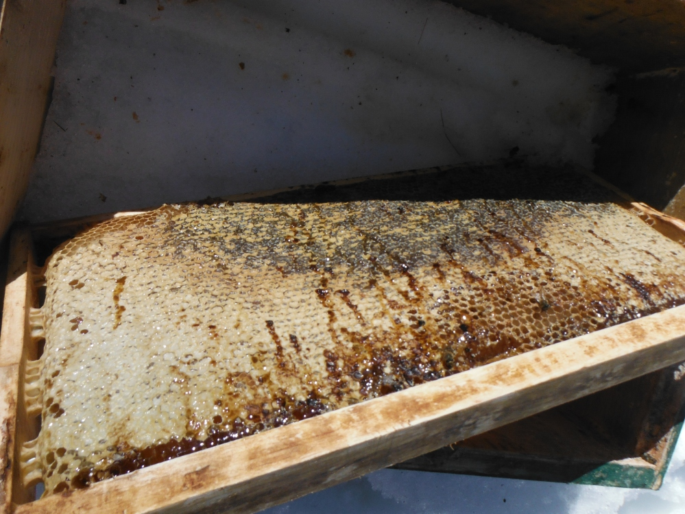 A deep frame of capped honey, covered in poo.