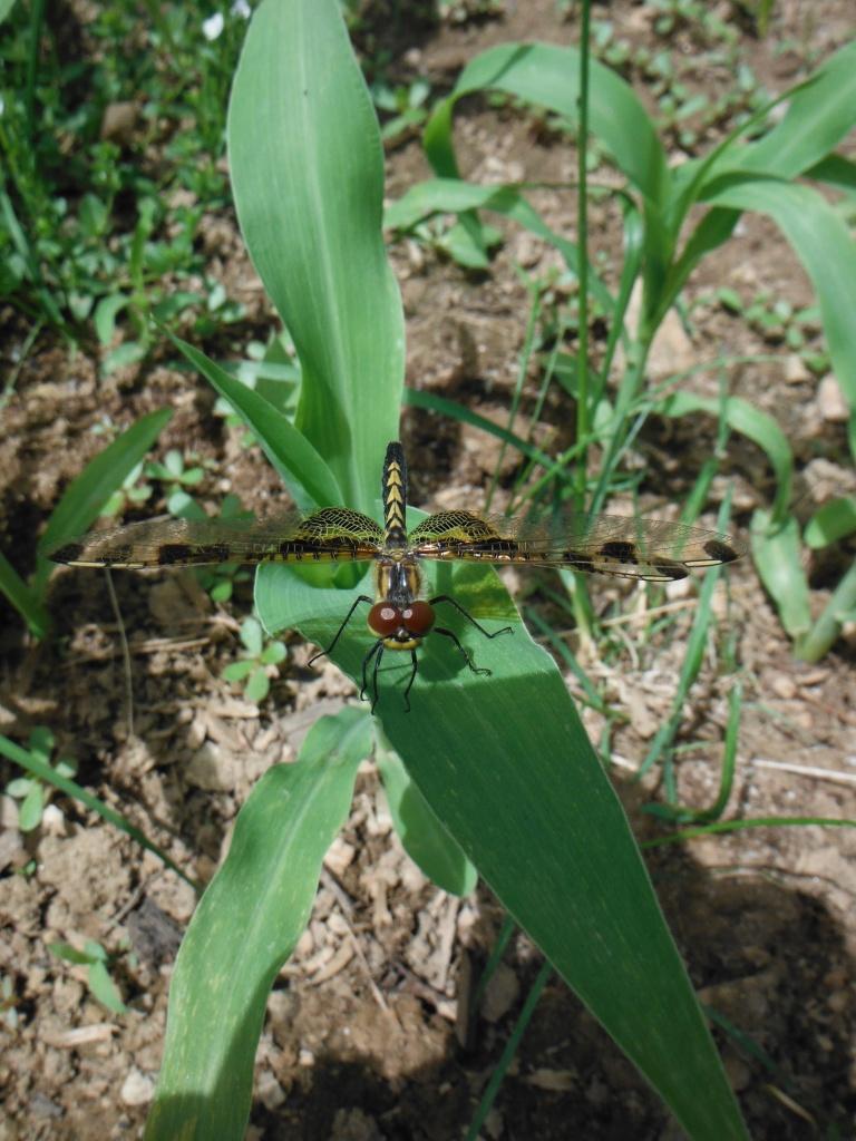 Happy dragonflies too.