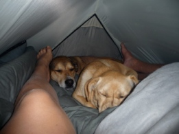 We intended for them to sleep outside the tent but, they crammed in and pretended to instantly be asleep. We got the message.