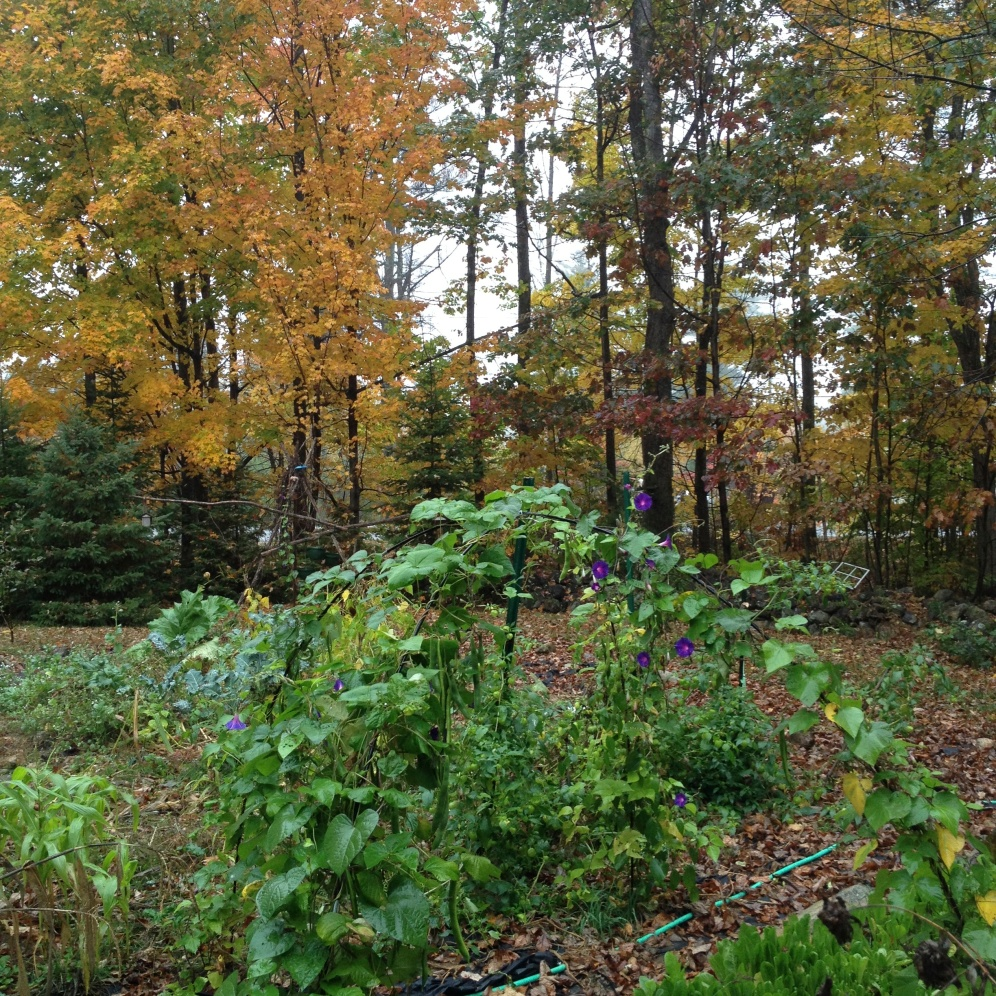 the front yard late Oct